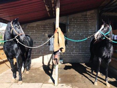 Pacchetto 5 Lezioni d'equitazione a Formello