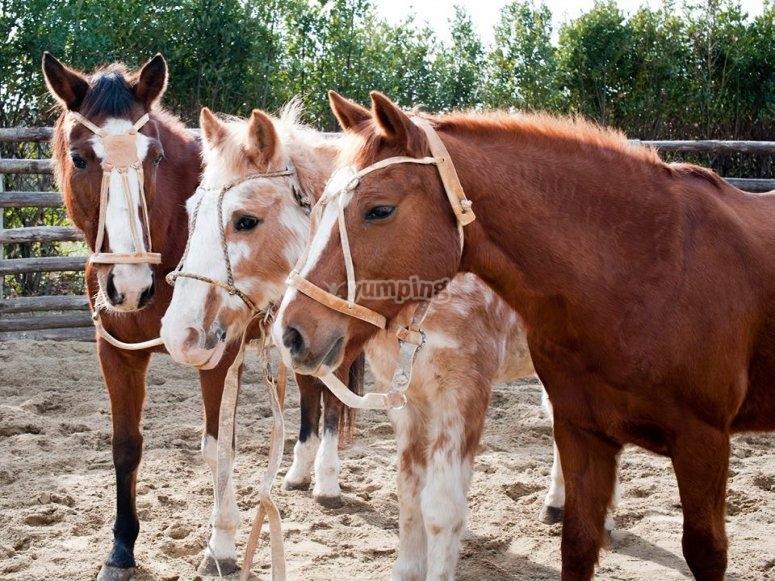 vieni a conoscere i nostri bellissimi cavalli