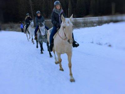 Passeggiata a cavallo su neve(1ora), Val di Fassa