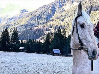 Passeggiata a cavallo su neve(1,5h) , Val di Fassa