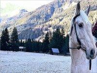 il nostro cavallo bianco come la neve!