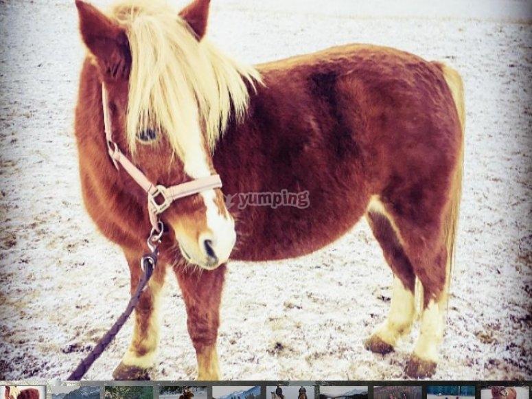 i nostri cavalli sono bellissimi vieni a conoscere i nuovi arrivati