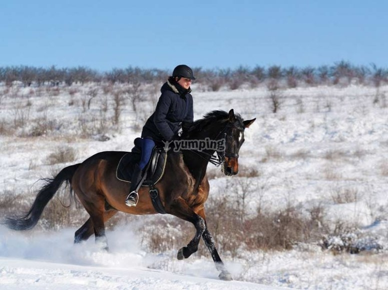 stallions racing on the snow, what are you waiting for?