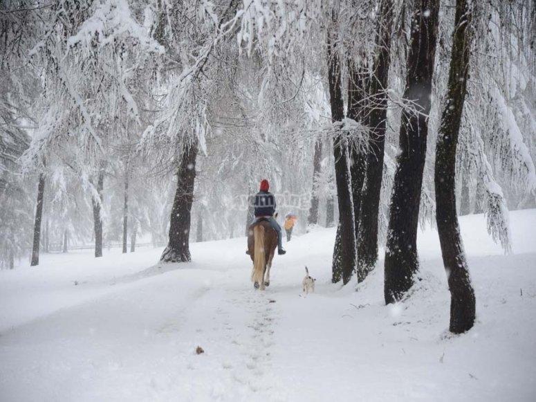 una passeggiata sulla neve rigenera i sensi