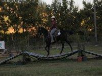 Horse riding lesson (1h), Rome