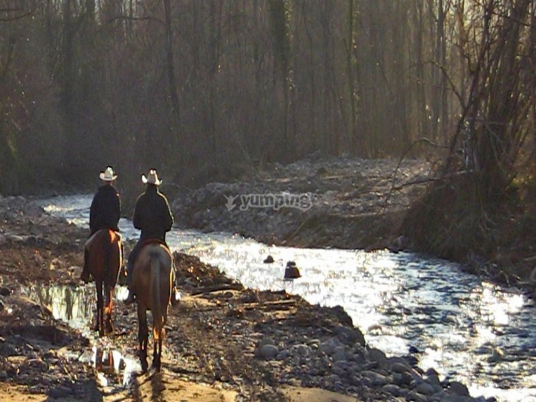 cavalli lungo il fiume