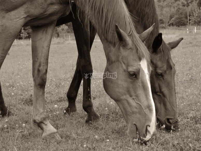 vieni a conoscere i nostri cavalli