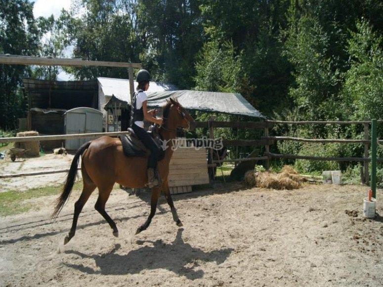 il cavallo diventerá il tuo migliore amico