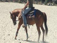 vieni ad apprendere le tecniche dell'equitazione