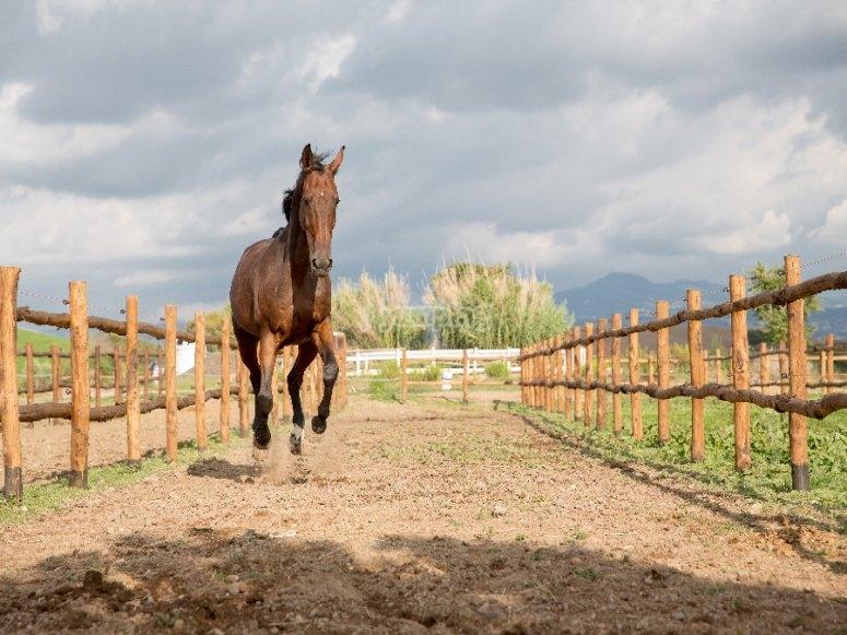 I nostri cavalli galoppano felici
