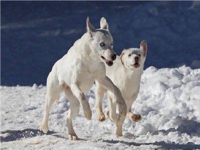 Cani da Slitta Tour Tiziano Ruffa