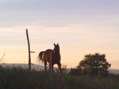 Centro Equestre Tre Laghi