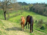 Nostri cavalli
