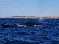 Balene marzo 2011