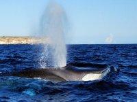 Passaggio delle balene Marzo 2011