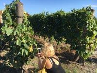 Between cellars and vineyards