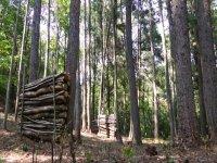 Un campo boschivo