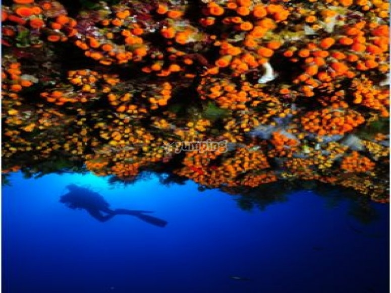 Magnificent seabeds