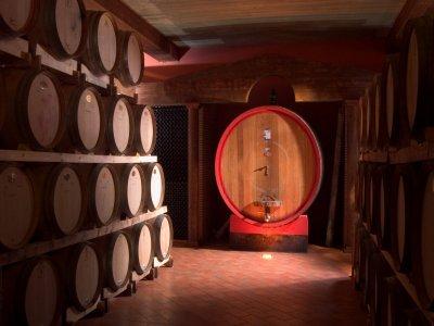 Percorsi di Vino
