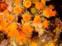 Submarine blooms