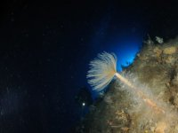 Diving in Palinuro
