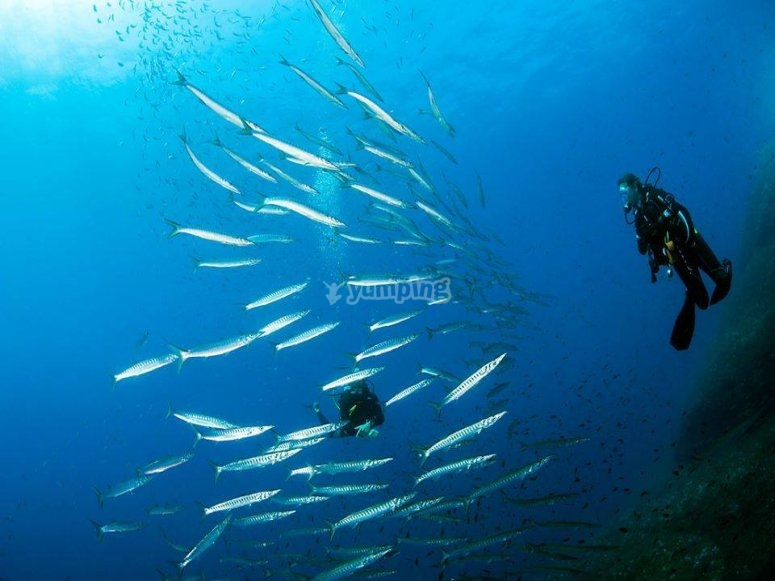 Gli abitanti del mare