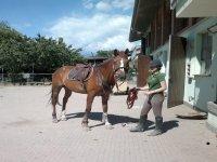 i nostri cavalli sono dolcissimi