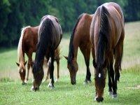 alcuni dei nostri cavalli si nutrono dopo una passeggiata