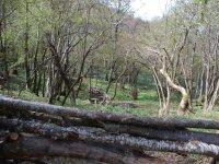 Barriere di legno