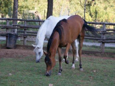 Quad Horse Ranch