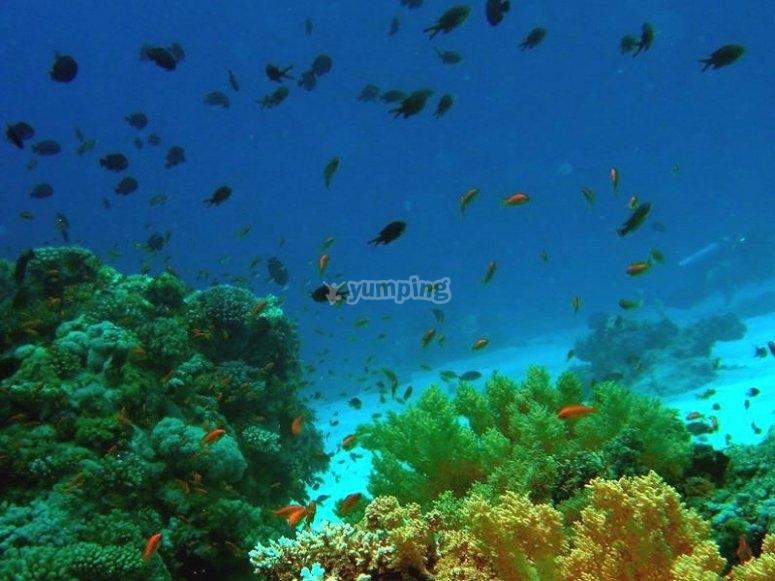 Immersioni piu lunghe grazie al corso Nitrox Diver PADI