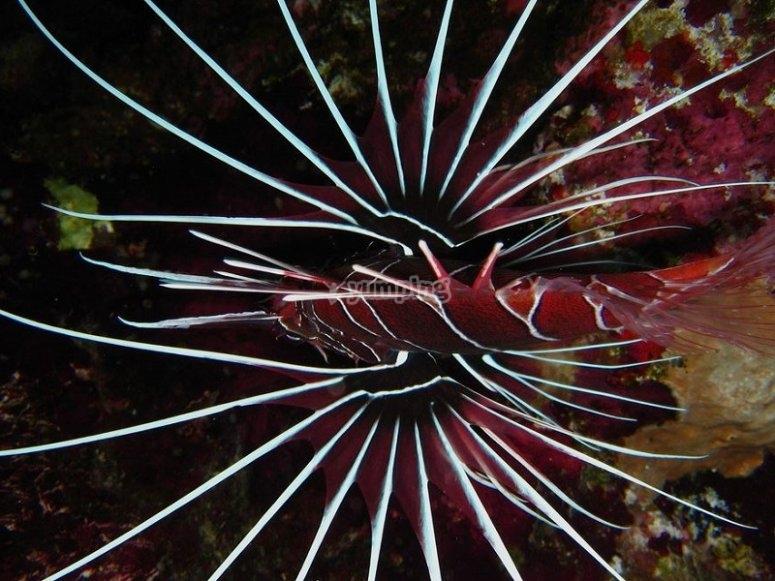 Corso Deep Diver PADI per immersioni profonde in Liguria