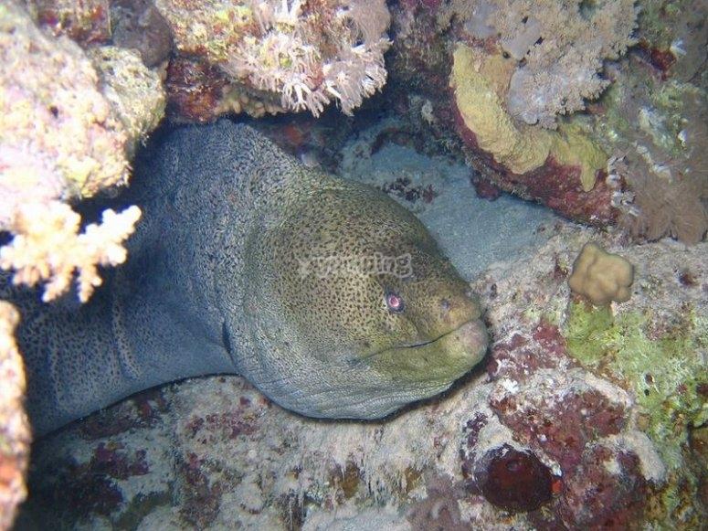 Immergersi fino a 40 metri con il corso Deep Diver PADI