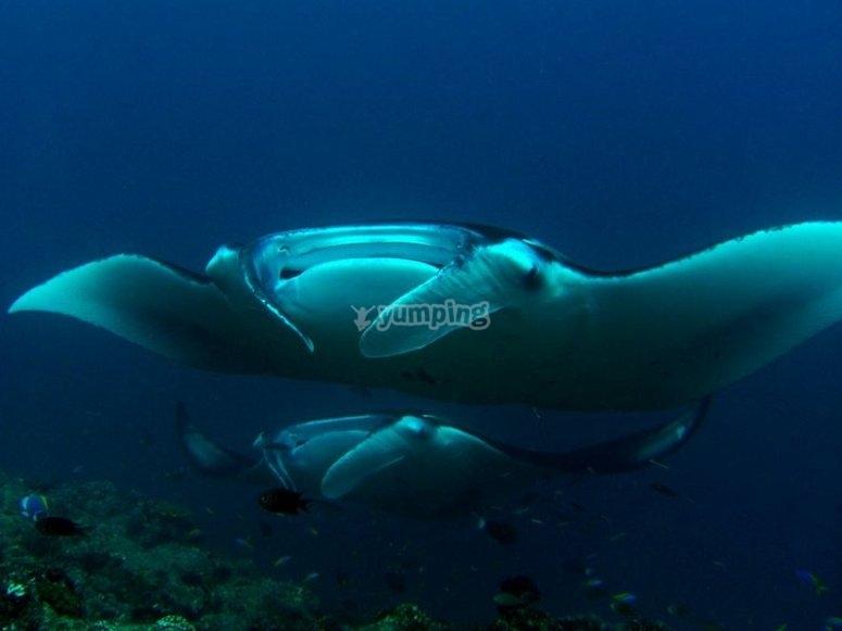 Immersioni profonde con il corso Deep Water PADI