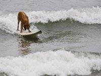 Amici surfisti