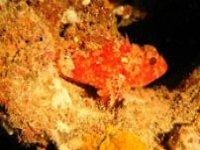 reddish fluorescence