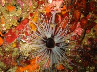 flowering colors