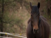 One of our beautiful horses