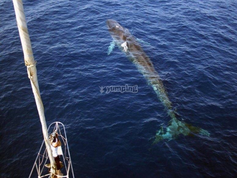 Delfini dalla barca