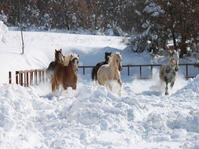 Le Siepi Country Farm Passeggiate a Cavallo