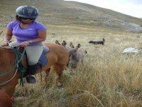 Passeggiate equestri in Abruzzo