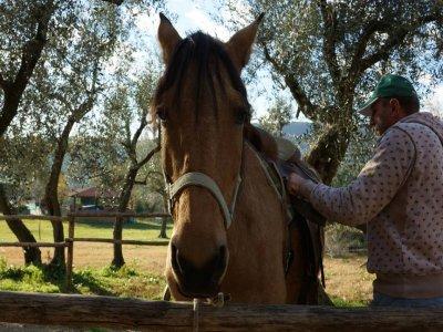 Incontri equestri in inglese