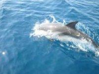 Dolphins on the horizon