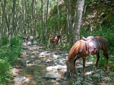 ASD equestre Akerontia Passeggiate a Cavallo
