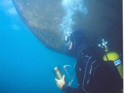 Nereidi Diving