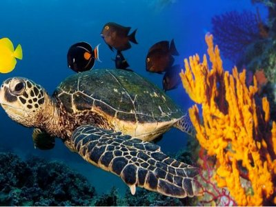 Sercomar Diving