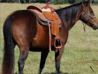 Lo Ninno Passeggiate a Cavallo