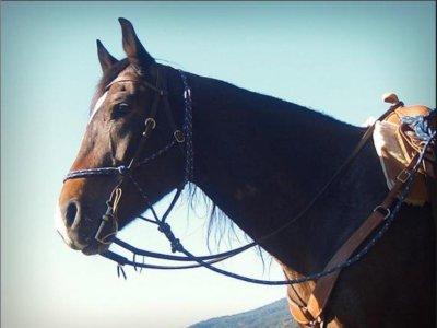 Maremma Holidays Passeggiate a Cavallo