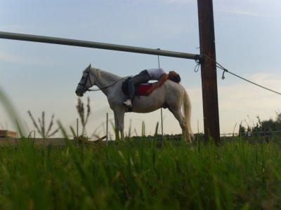 ASD Centro Ippico Great Ranch Scuola di Equitazione