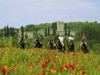 Cavalieri nei papaveri